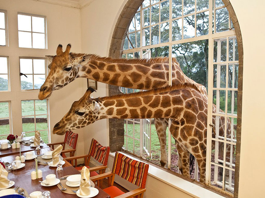 24 Giraffe Manor, Kenya-02