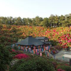 The Azaleas of Shiofune Kannon-ji Temple in Japan