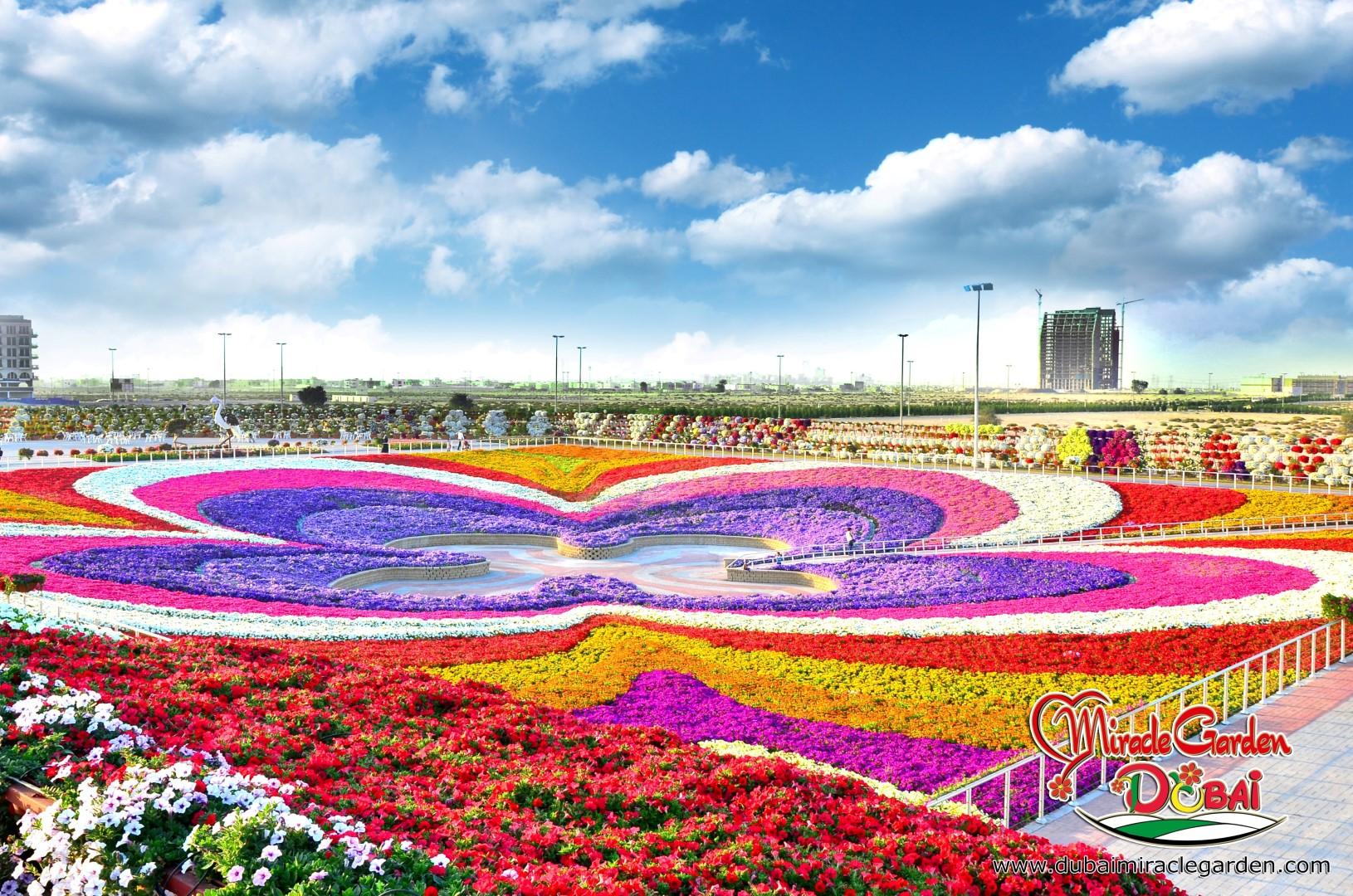 Dubai Miracle Garden: The World's Biggest Natural Flower