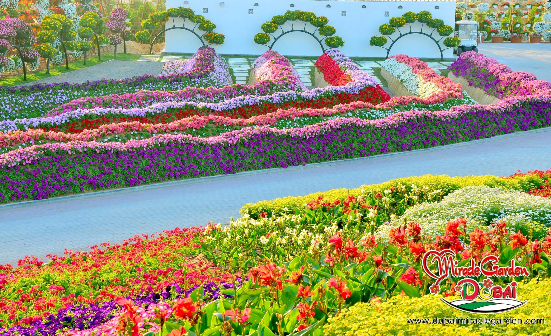 Dubai miracle garden the world 39 s biggest natural flower for Flowers landscape gardening