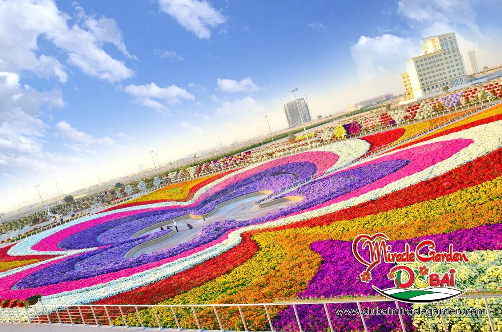 Dubai Miracle Garden The World S Biggest Natural Flower