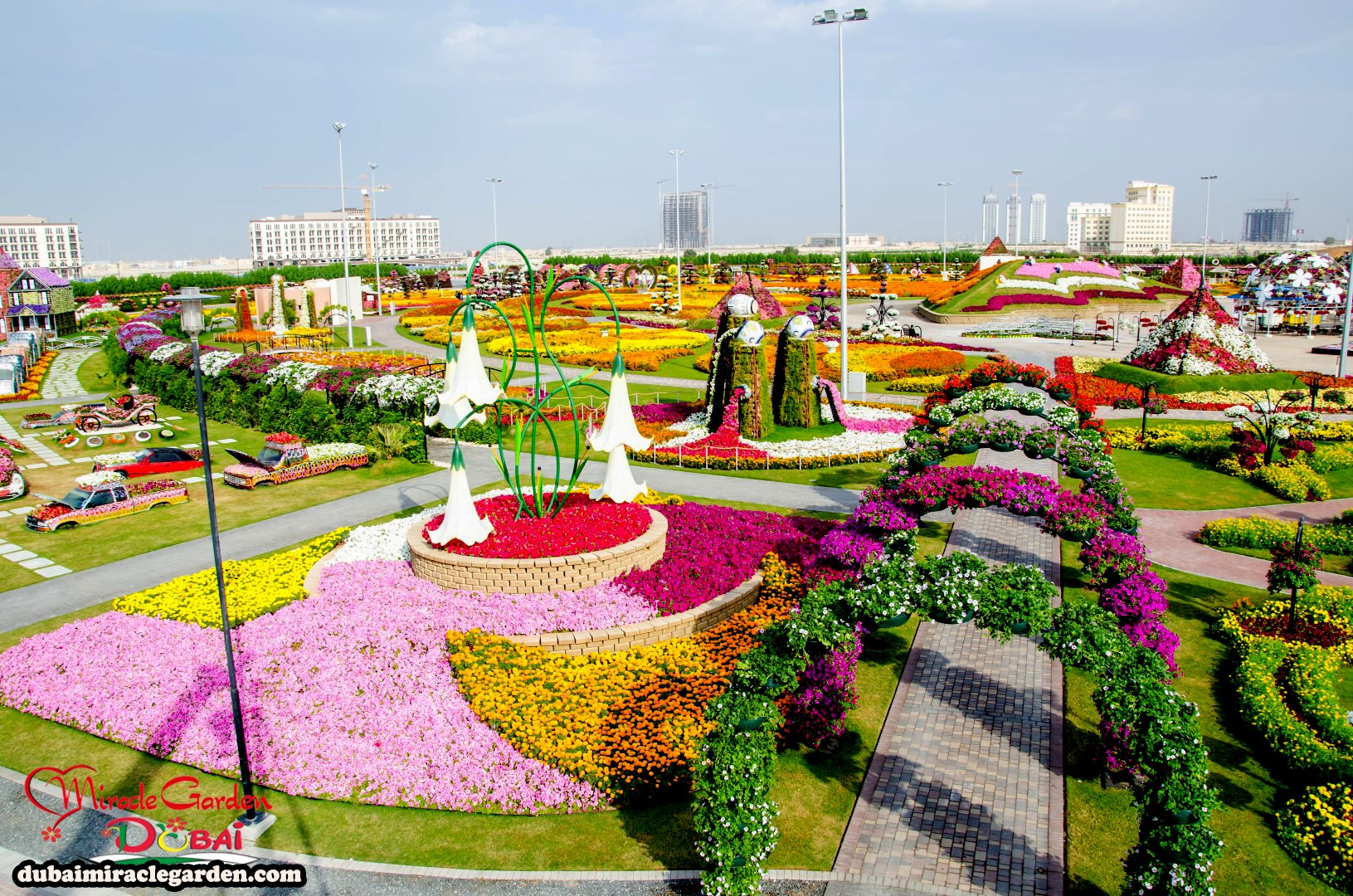 Dubai Miracle Garden: The World's Biggest Natural Flower