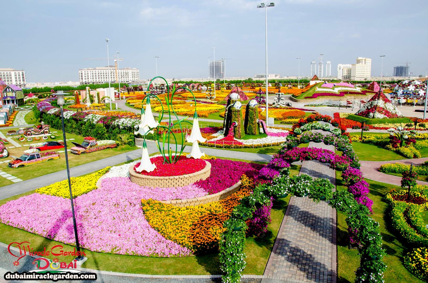 dubai miracle garden the world s biggest natural flower garden with
