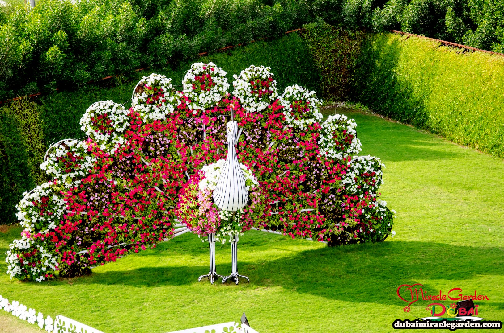 Dubai miracle garden the world 39 s biggest natural flower for Flower landscape