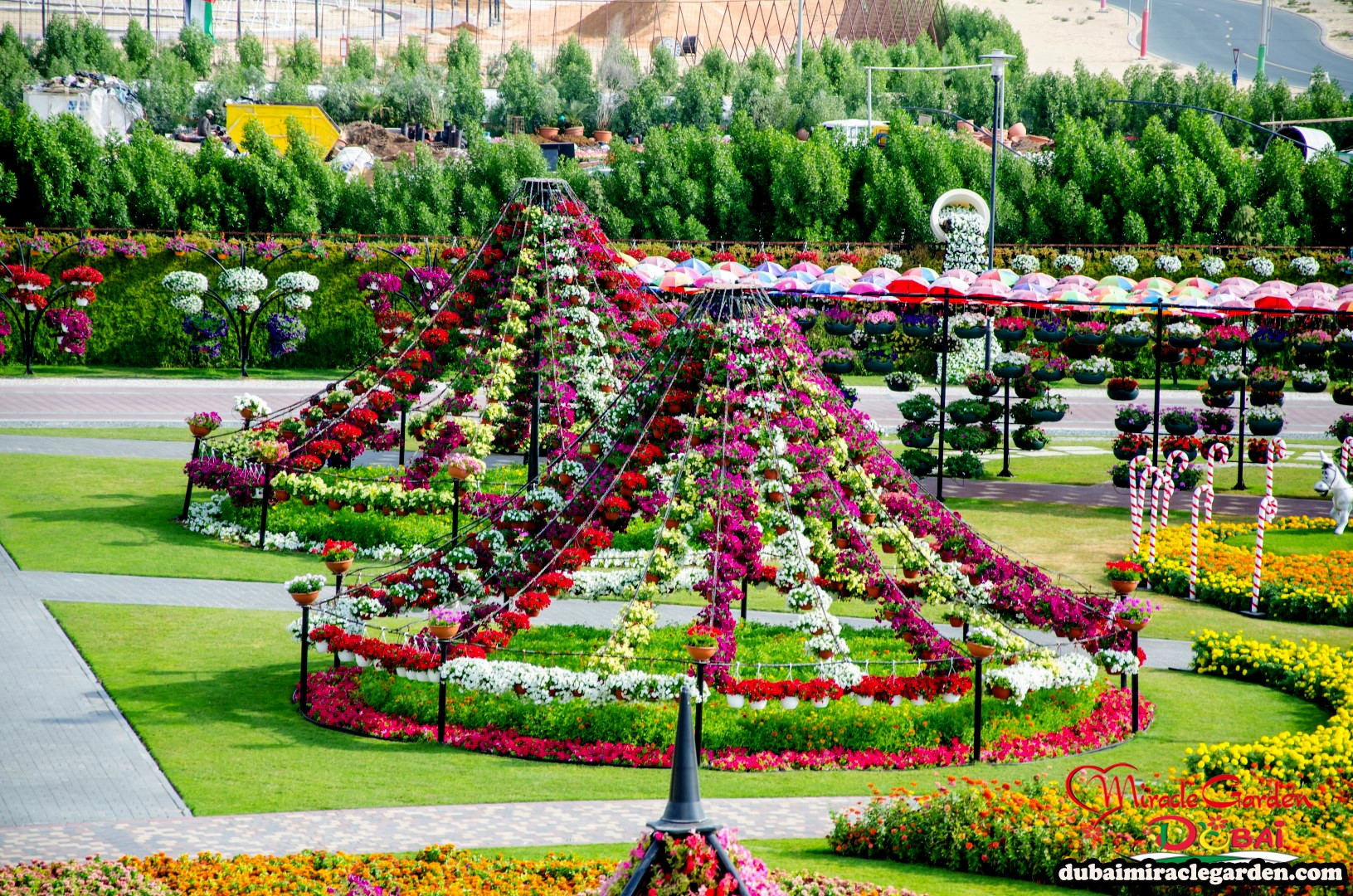 Dubai miracle garden the world 39 s biggest natural flower for The landscape gardener