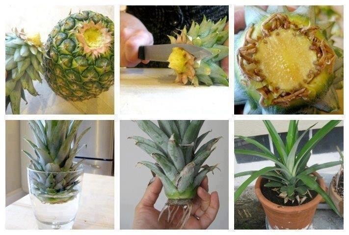 18-pineapple