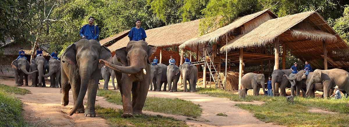 19-Anantara Golden Triangle Elephant Camp & Resort