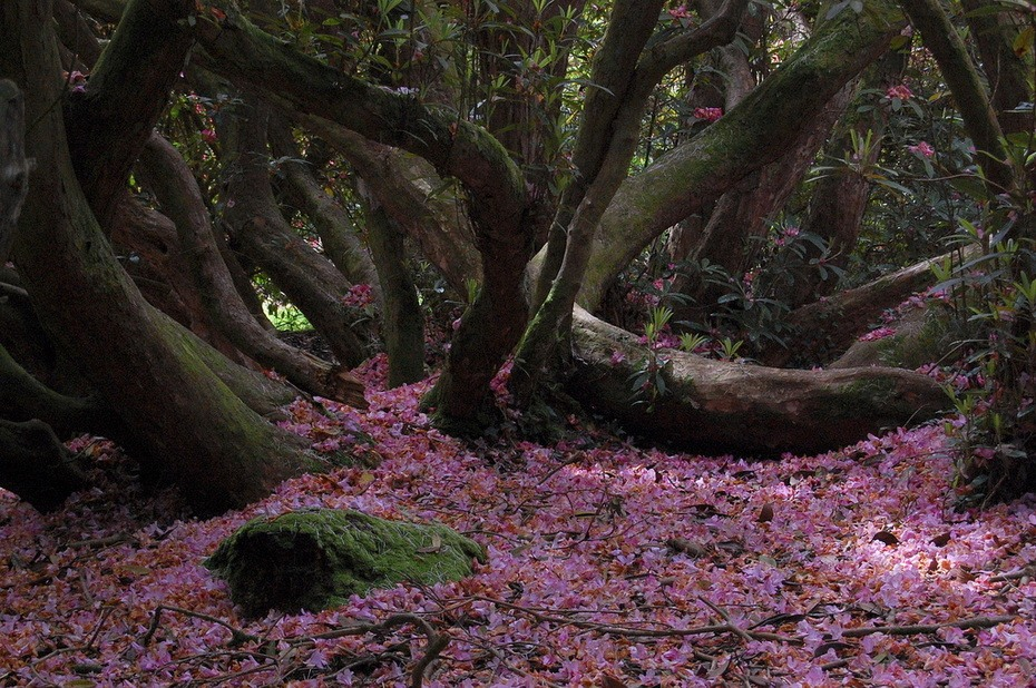 Gardens-of-Heligans-00-1