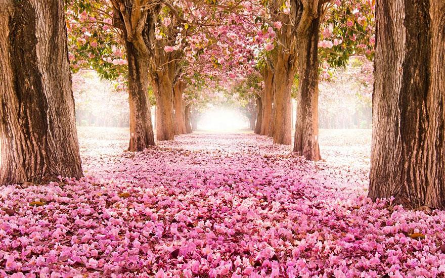 amazing-tree-tunnels-12