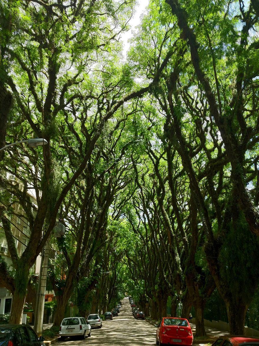 amazing-tree-tunnels-16
