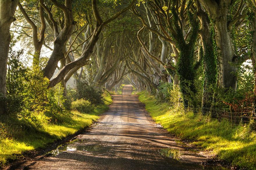 amazing-tree-tunnels-2