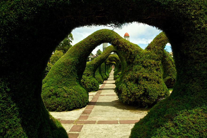 amazing-tree-tunnels-21