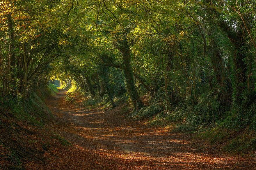 amazing-tree-tunnels-22