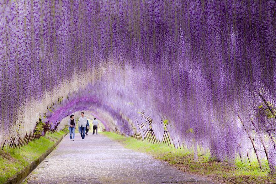 amazing-tree-tunnels-4