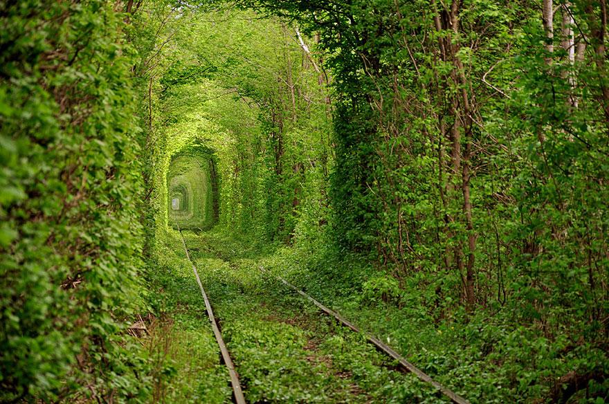 amazing-tree-tunnels-8