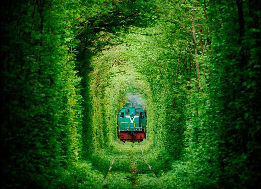 amazing-tree-tunnels-9