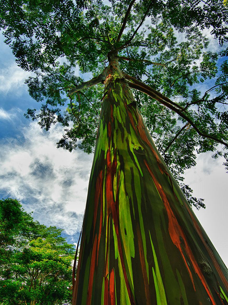amazing-trees-012