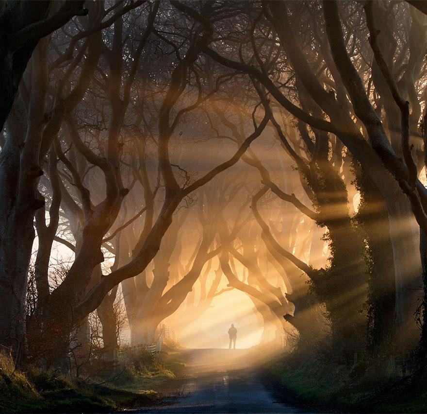 amazing-trees-016