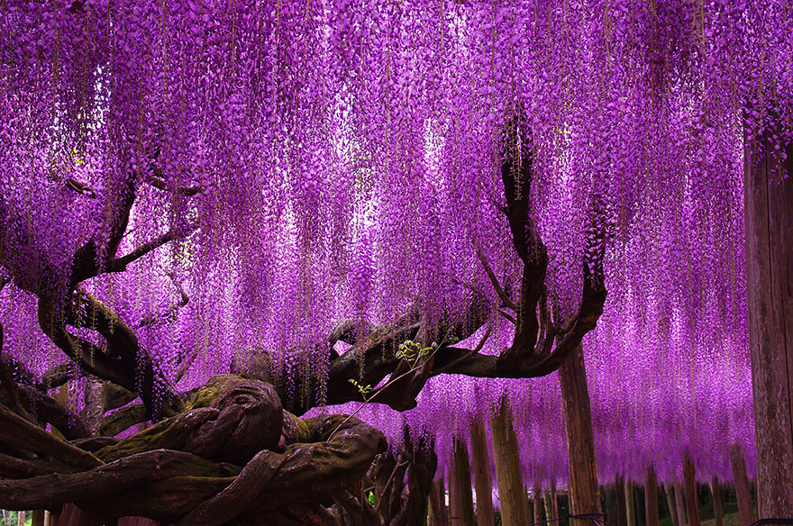 amazing-trees-02