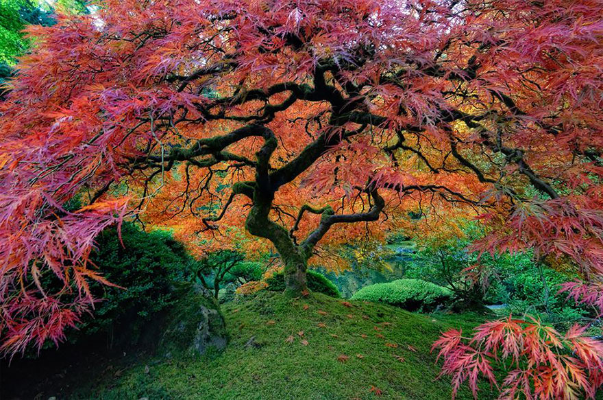 amazing-trees-04