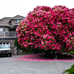 15 Of The Most Magnificent Trees In The World