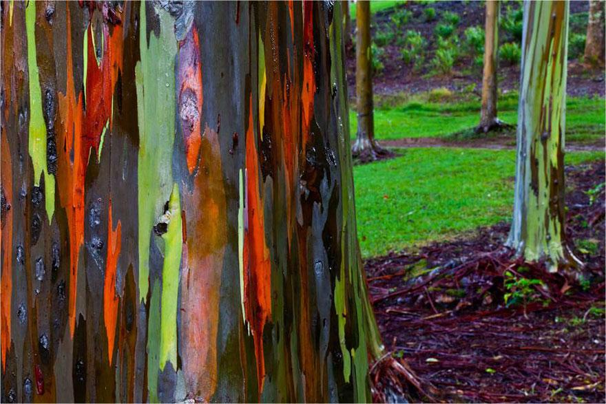 amazing-trees-12
