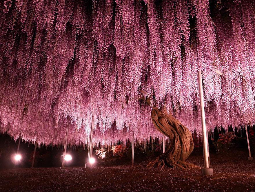 amazing-trees-2