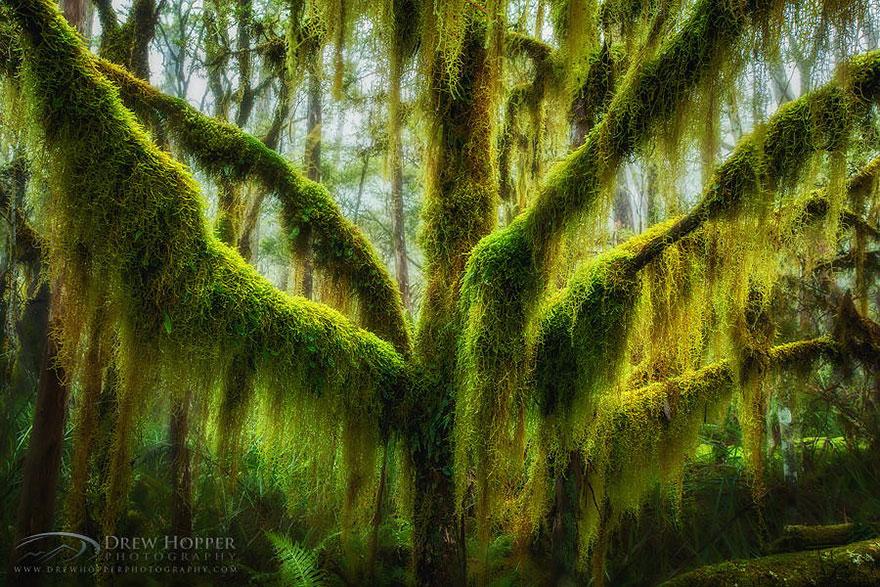 amazing-trees-5
