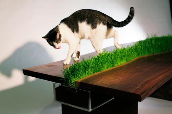 furniture-design-for-pet-lovers-6