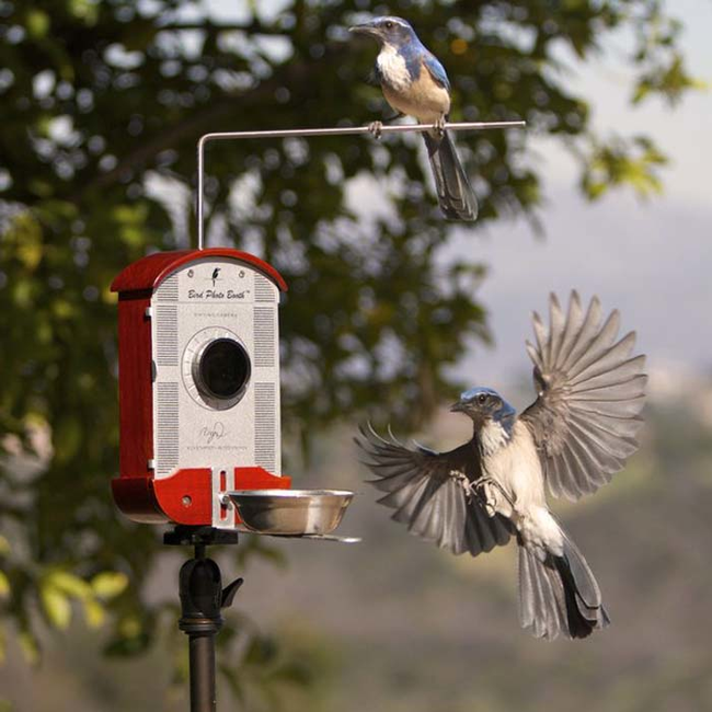 A bird feeder with a built in camera.