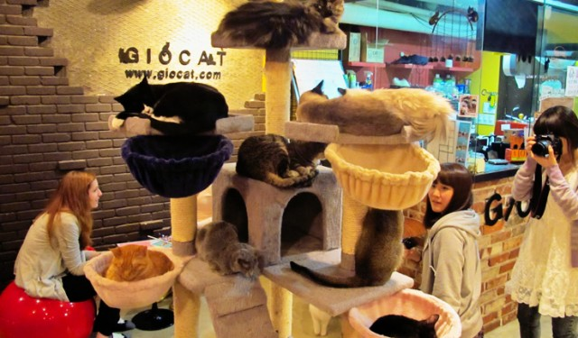 10 Weird But Wonderful Themed Cafes and Restaurants ...