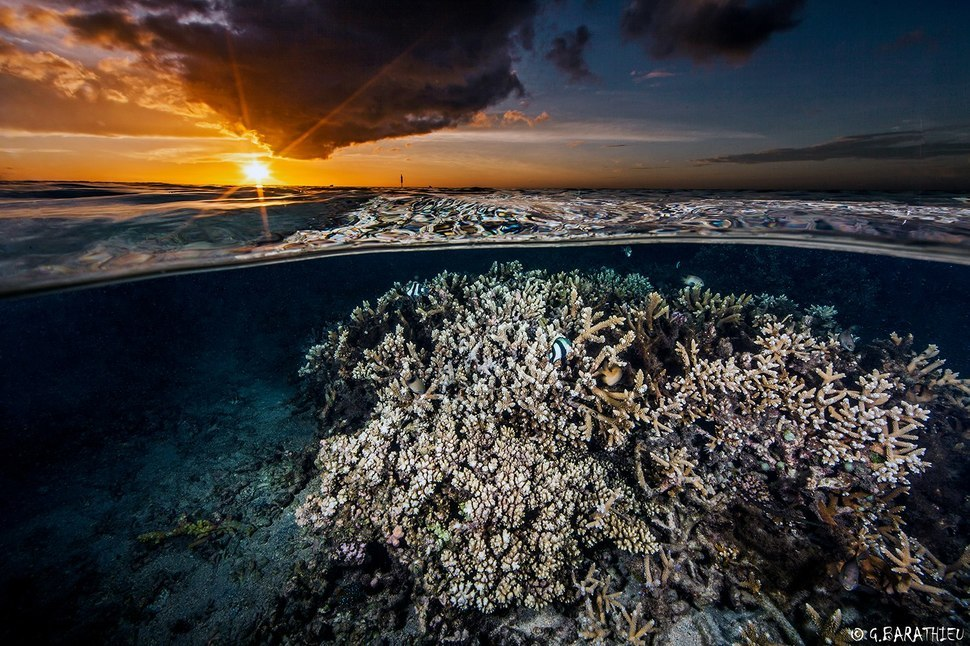 AD-Incredible-Photos-That-Reveal-A-Glimpse-Of-What-Lies-Beneath-The-Waters-Surface-17-1