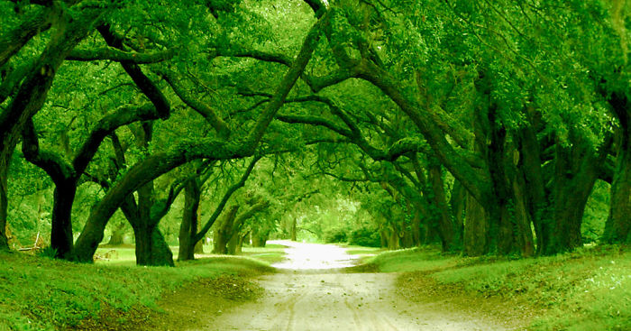 AD-World's-Magical-Streets-28