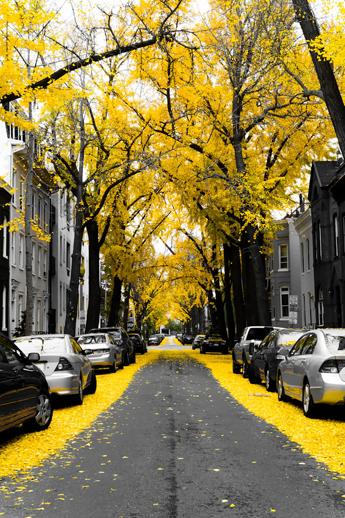 AD-World's-Magical-Streets-5