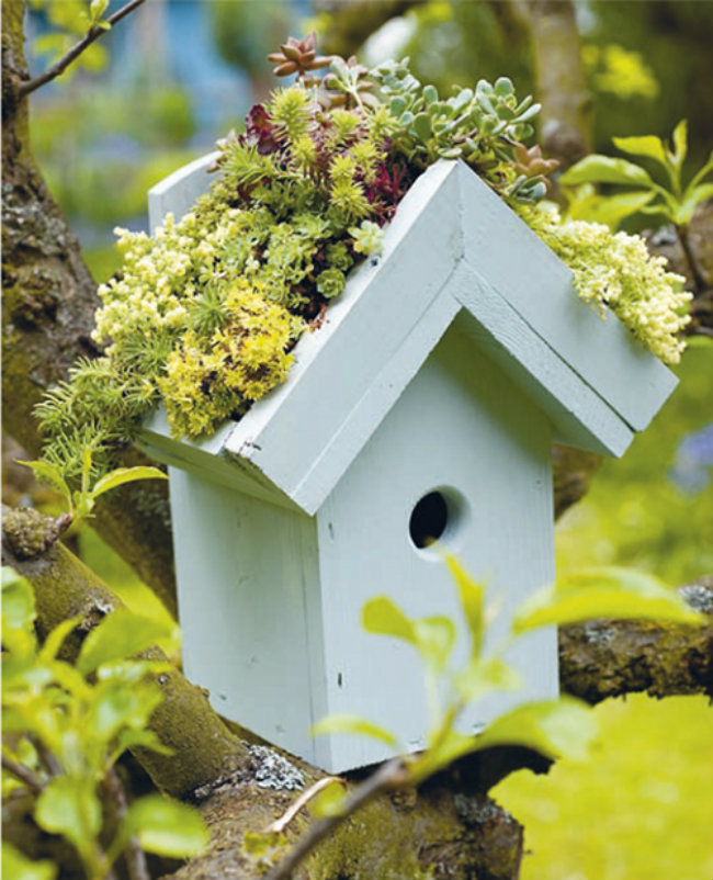 AD-Gorgeous-Tiny-Gardens-2