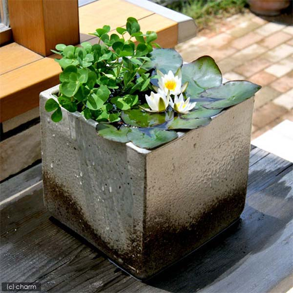 AD-Mini-Pond-In-A-Pot-16