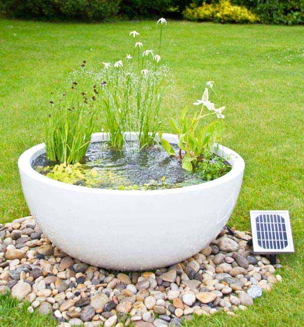 AD-Mini-Pond-In-A-Pot-18