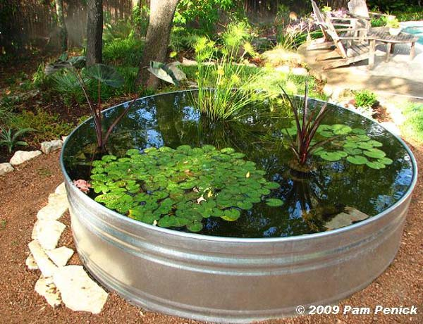 AD-Mini-Pond-In-A-Pot-5