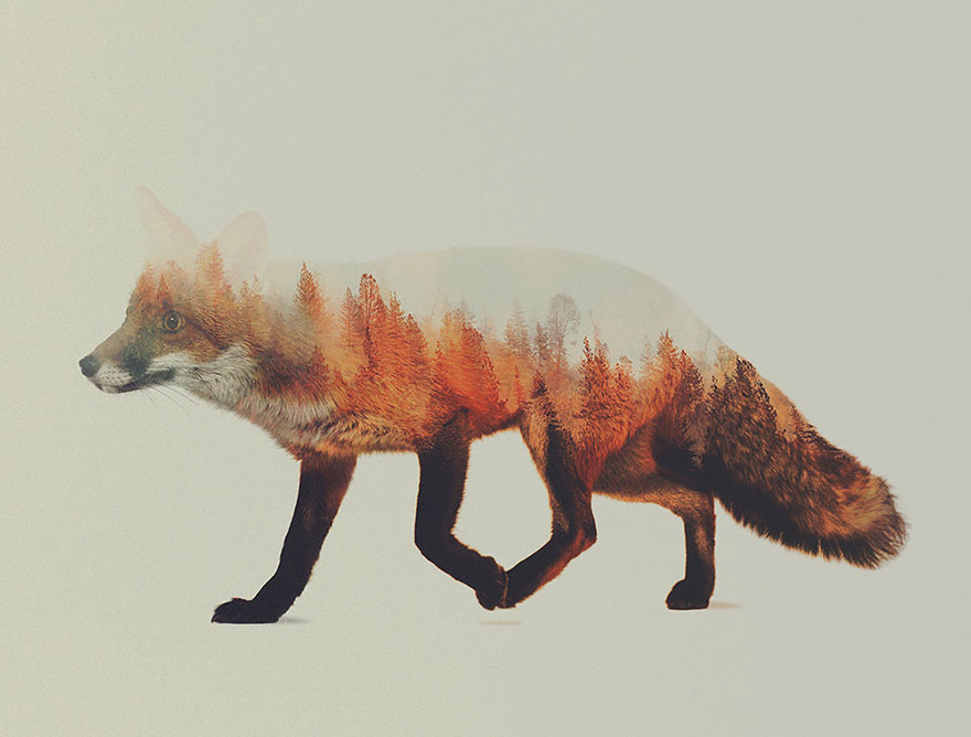 AD-Double-Exposure-Animal-Photography-Andreas-Lie-1