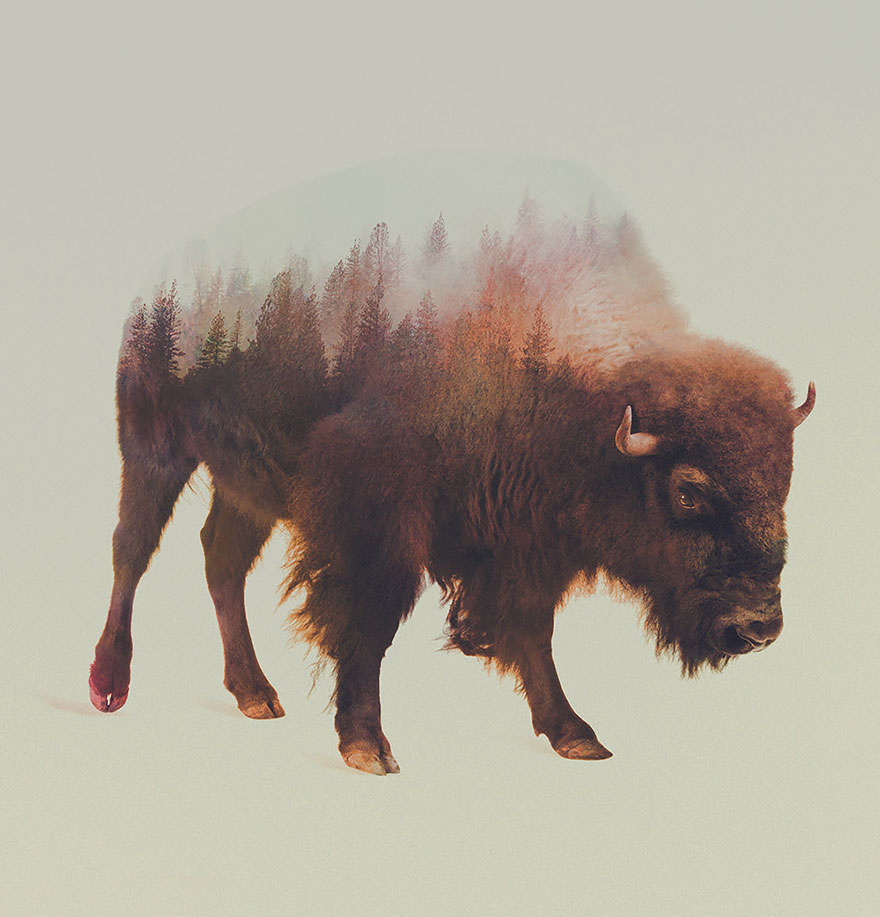 AD-Double-Exposure-Animal-Photography-Andreas-Lie-11