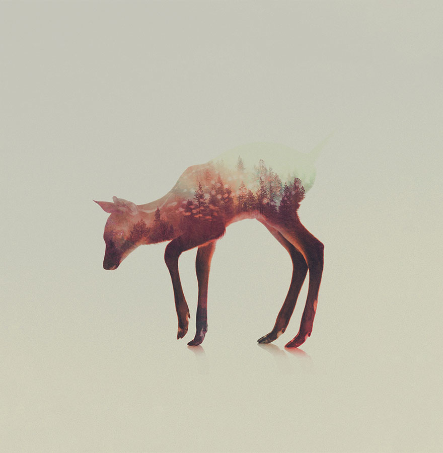 AD-Double-Exposure-Animal-Photography-Andreas-Lie-13