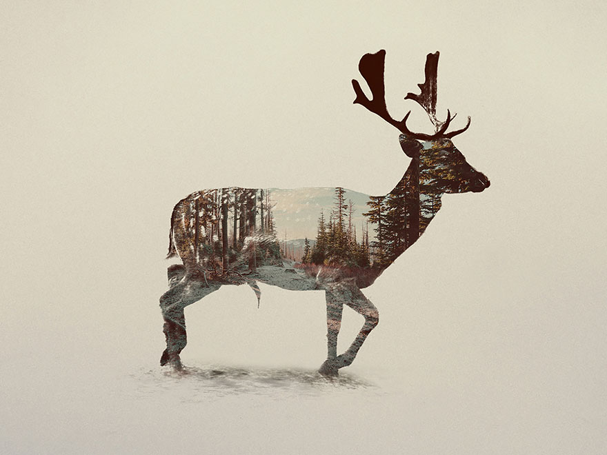 AD-Double-Exposure-Animal-Photography-Andreas-Lie-16