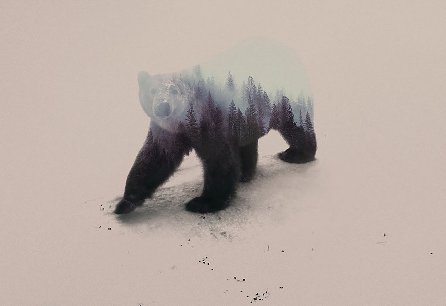 AD-Double-Exposure-Animal-Photography-Andreas-Lie-18