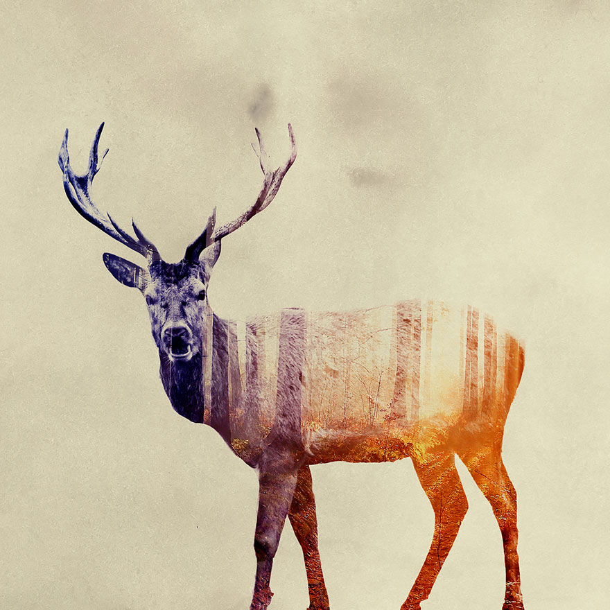 AD-Double-Exposure-Animal-Photography-Andreas-Lie-20