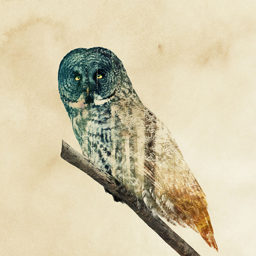 AD-Double-Exposure-Animal-Photography-Andreas-Lie-21