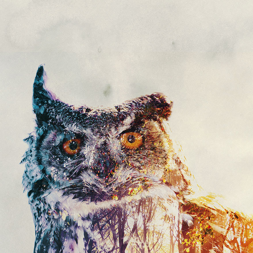 AD-Double-Exposure-Animal-Photography-Andreas-Lie-22