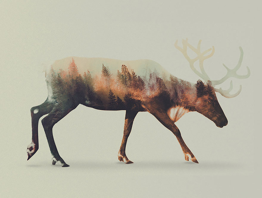 AD-Double-Exposure-Animal-Photography-Andreas-Lie-3