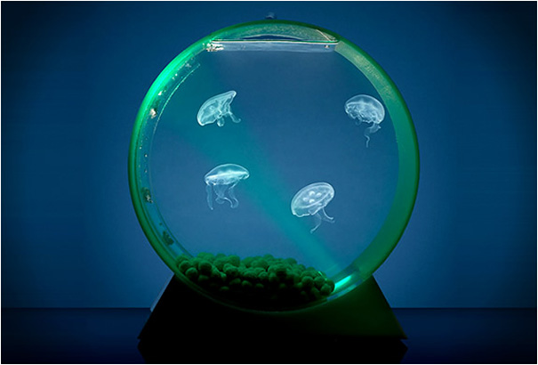AD-Creative-Aquariums-19