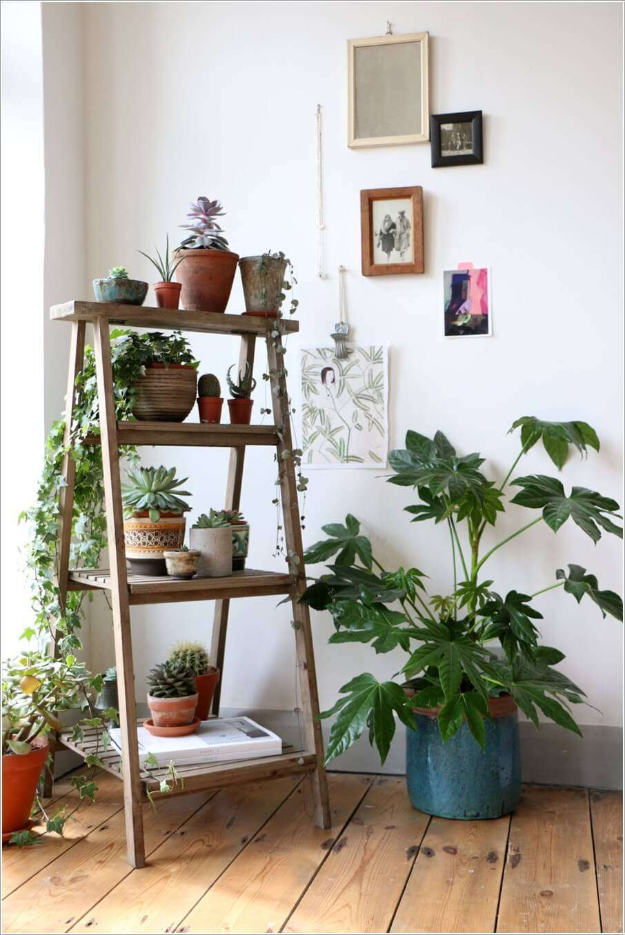 15 Amazing Ideas To Display Your Indoor Plants Architecture Design