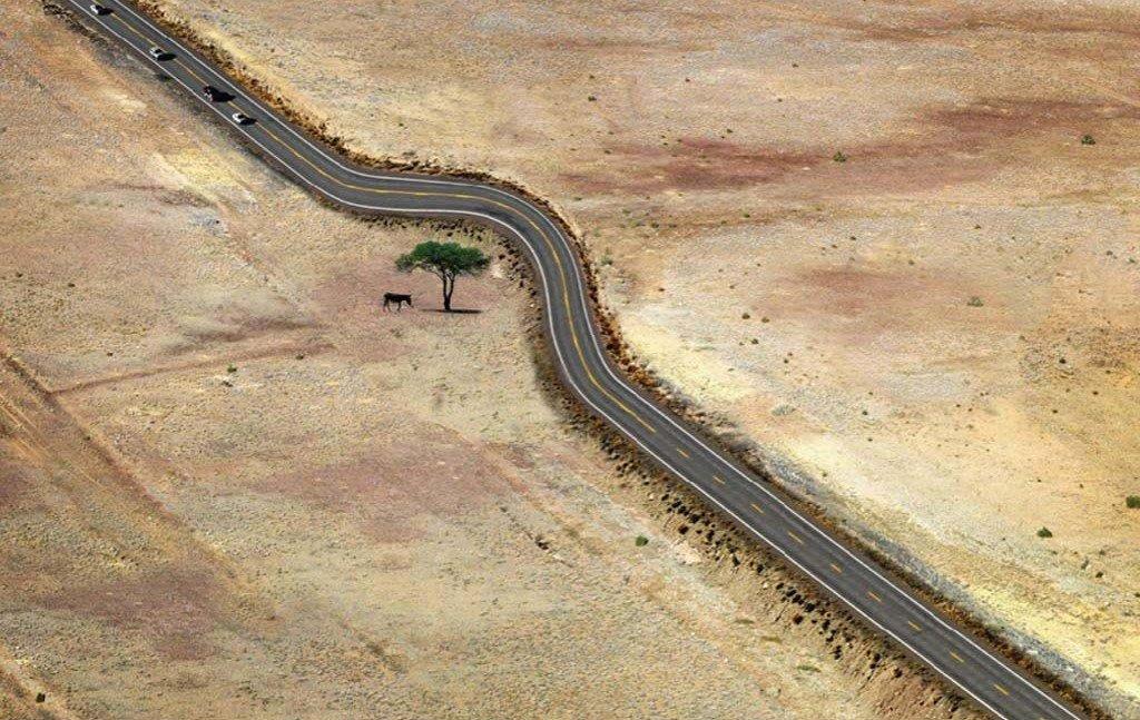 AD-Architecture-Around-The-Trees-23